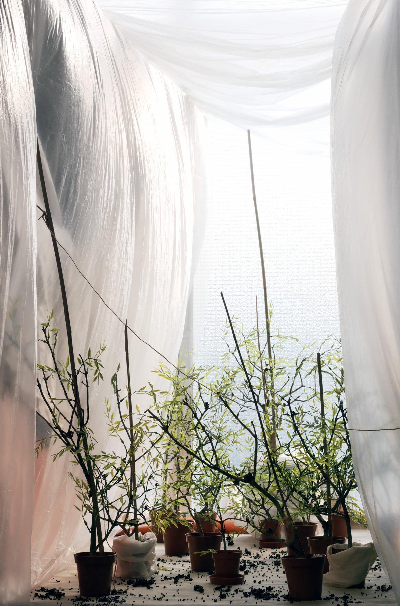'Caviar Plantation', Claudia Djabbari