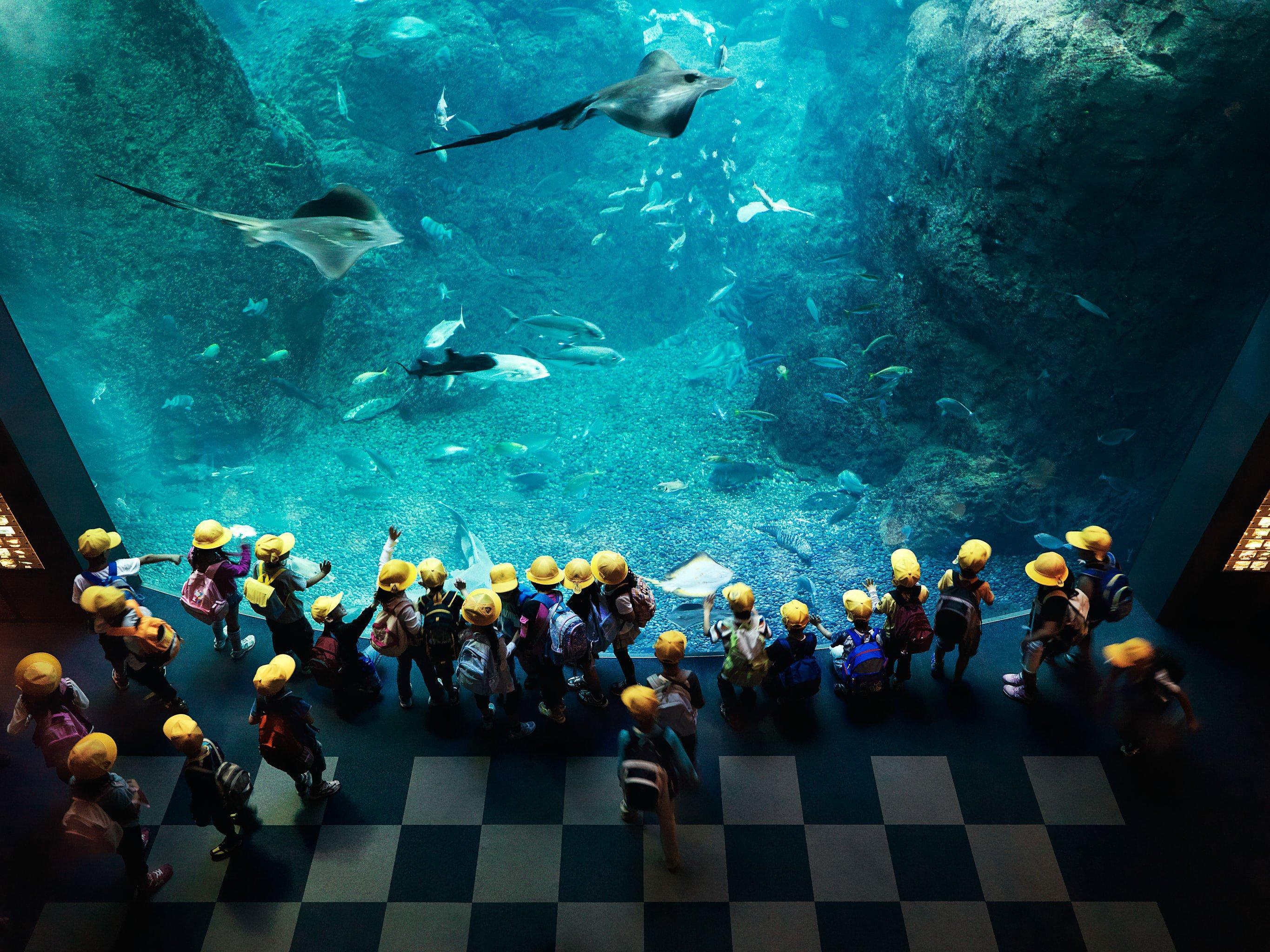 Enoshima Aquarium, Fujisawa